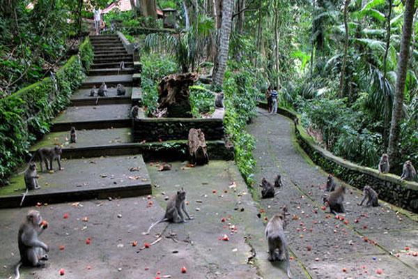 Hutan Monyet Suci di Ubud