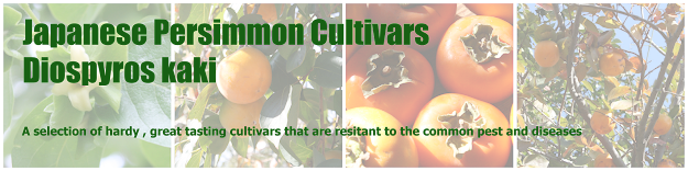 Persimmon for Permaculture