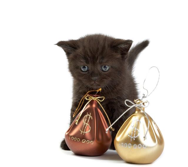 Kucing Blackie mendapatkan warisan dari Ben Rea