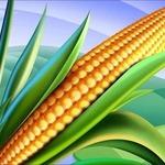Кукуруза в стихах для детей