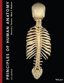 Principles of Human Anatomy 13th Edition