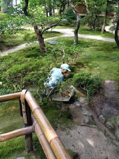 Un giardiniere spazzola il muschio