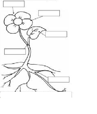 Plant development diagram plant free engine image for for Parts of a flower coloring page