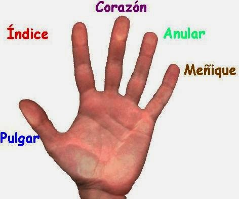 Los Dedos De La Mano Y Su Significado Metafísico