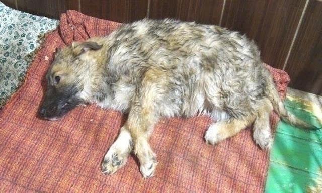 Чтобы спасти щенка, пришлось вырубить его изо льда топором