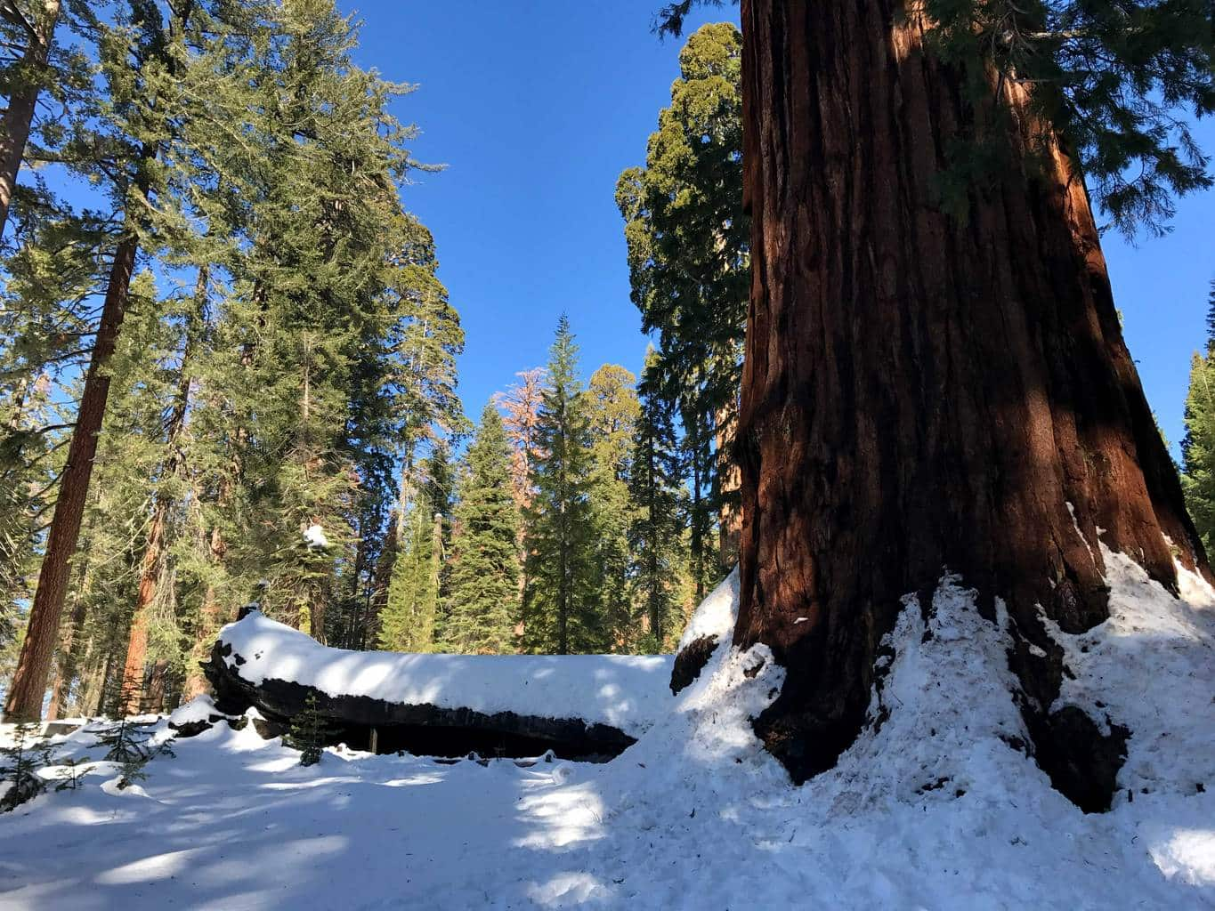 kings canyon national pk mature singles Sequoia and kings canyon national parks sequoia national park, ca  why haven't sequoia and kings canyon national parks been combined into a single park.