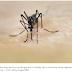 Paraíba identifica dois tipos de vírus da dengue no estado, diz boletim.