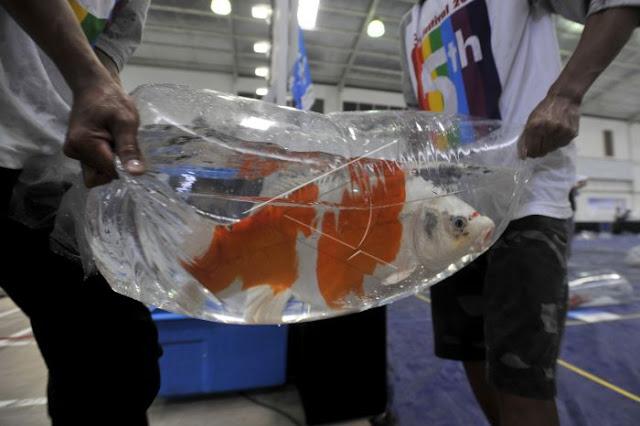 Cara ekspor ikan ke luar negeri