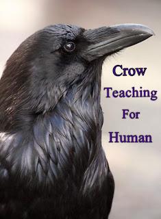 Crow-teaching-for-human-kawaii-ne-murda-dafan-karna-sikhaya
