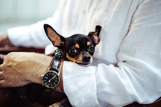 Love Begins With Pets and Insurance