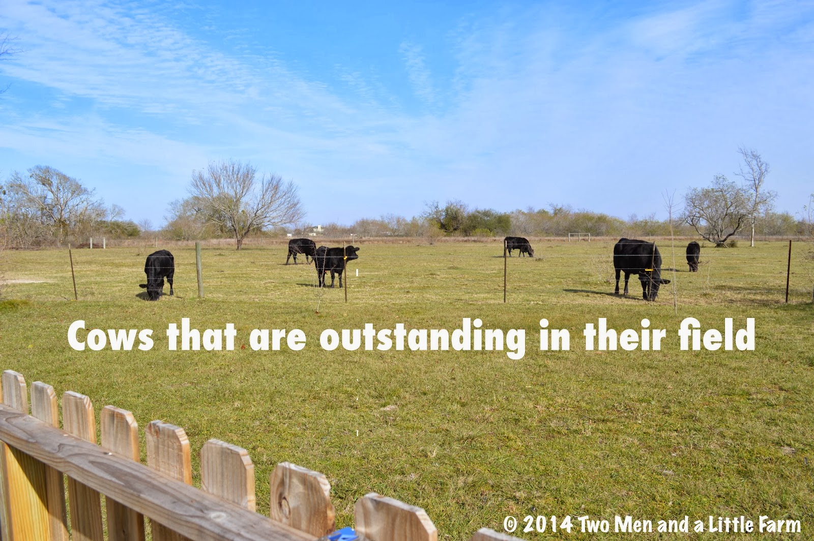 Random Livestock Humor