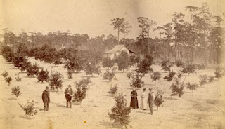 1887 photo depicts people in young citrus grove with farmhouse in background
