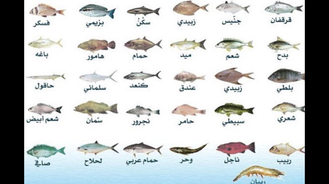تعرف على أفضل أنواع السمك بدون عظم شوك