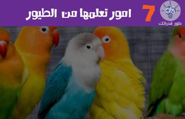 7 امور تعلمها من الطيور