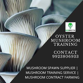 Oyster Mushroom Company In Indi