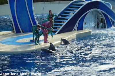 SeaWorld Orlando Blue Horizons show