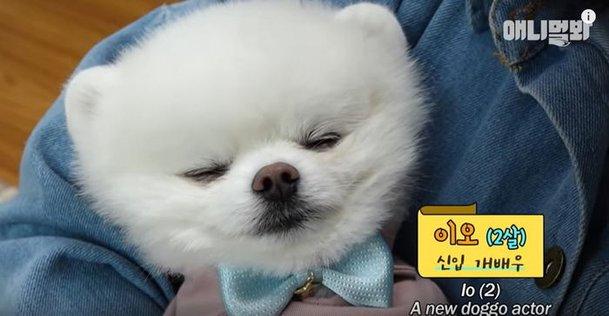 İş üstünde uyuklayan aktör köpek ilgi çekiyor