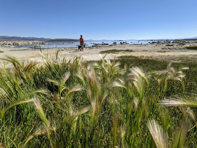 A person walks their dog on a beach in the background, with grasses in the foreground