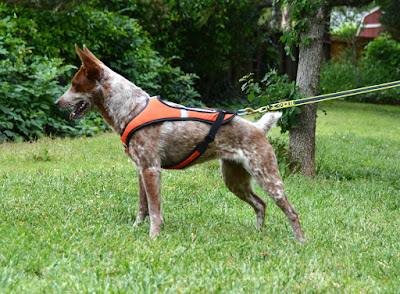 tough skin mushing harness