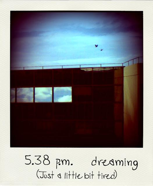 Fotografia di uccelli in volo sopra a palazzo