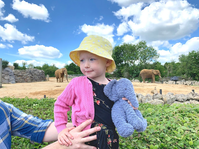 Toddler with her blue Jellycat elephant in front of elephants at Colchester zoo