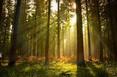 Ecosistemas mexicanos bosque templado