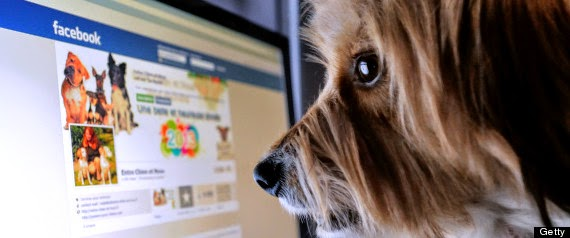 New Social Network for your Pets