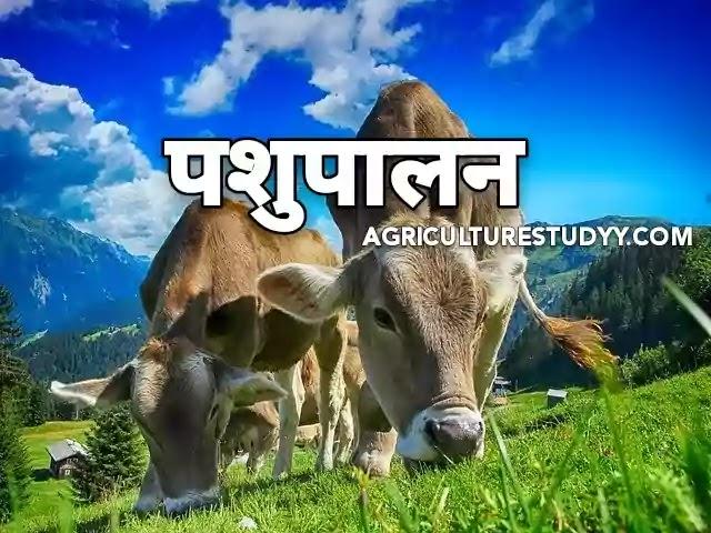 पशुपालन की जानकारी हिंदी में (Animal husbandry in hindi), पशुपालन की परिभाषा, पशुपालन क्या है, पशुपालन के क्या लाभ है, पशुपालन का महत्व, Agriculture Studyy