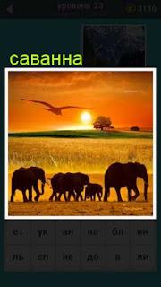 в свете заката в саванне идет стадо слонов 23 уровень 667 слов