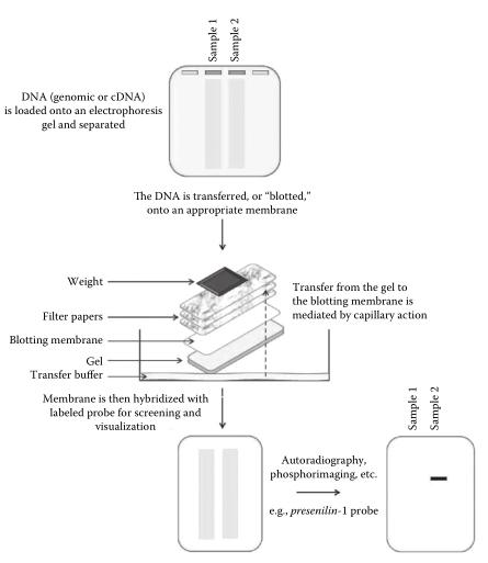 Nucleic Acid Blotting