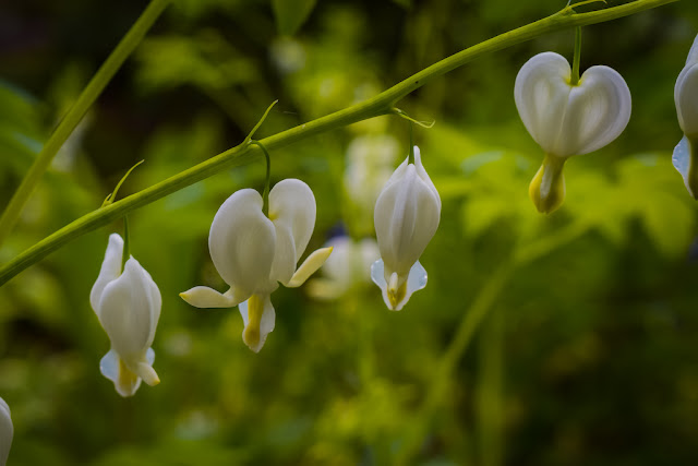 Himalayan Garden and Sculpture Park flowers