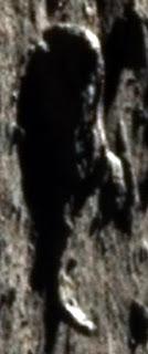 Dead Alien Astronaut on Moon or alien hoax