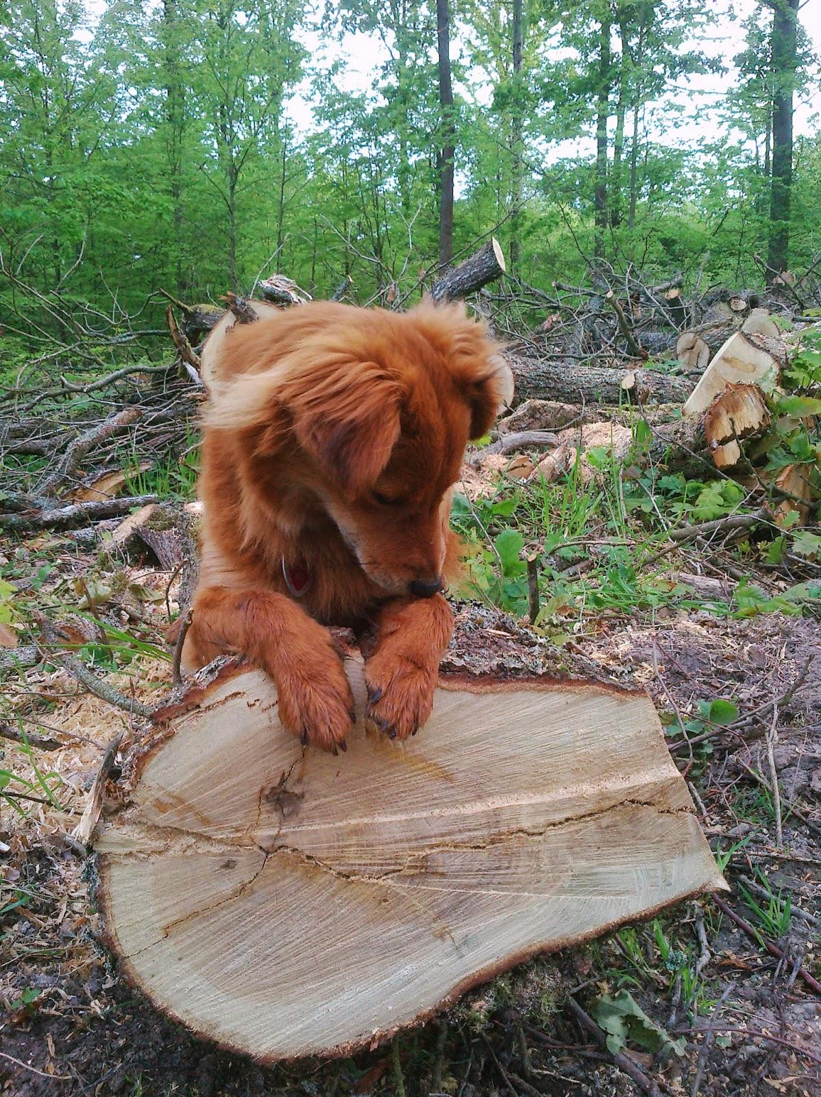 karl erwin und die frau - ein haus wird glücklich: brennholz machen