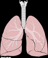 وظيفة الرئتين في التبادل الغازي بين الجسم والمحيط