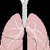 بحث حول وظيفة الرئتين في التبادل الغازي بين الجسم والمحيط