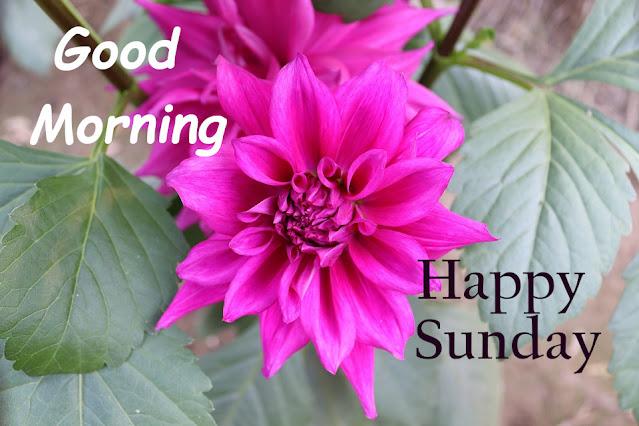 Good Morning Ji Happy Sunday