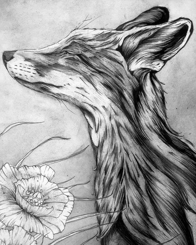 09-Red-Fox-A-Landerman-Animal-Drawings-Paintings-in-Graphite-and-Ink