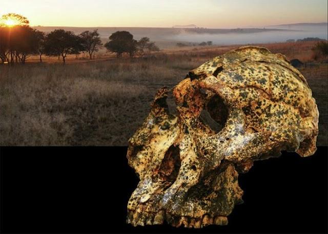 В ЮАР обнаружен человеческий череп возрастом два млн лет