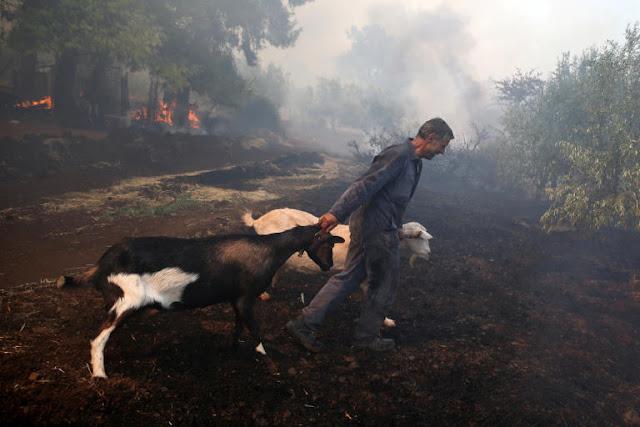 Εύβοια φωτιά: Η μάχη των κατοίκων να σώσουν τα ζώα τους (photos)