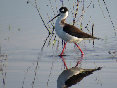 Sacramento National Wildlife Refuge California birding hotspot