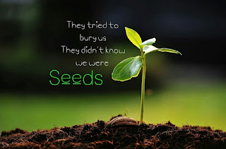 theytriedtoburyus-but-they-didnt-know-we-were-seeds-1200x796.jpg
