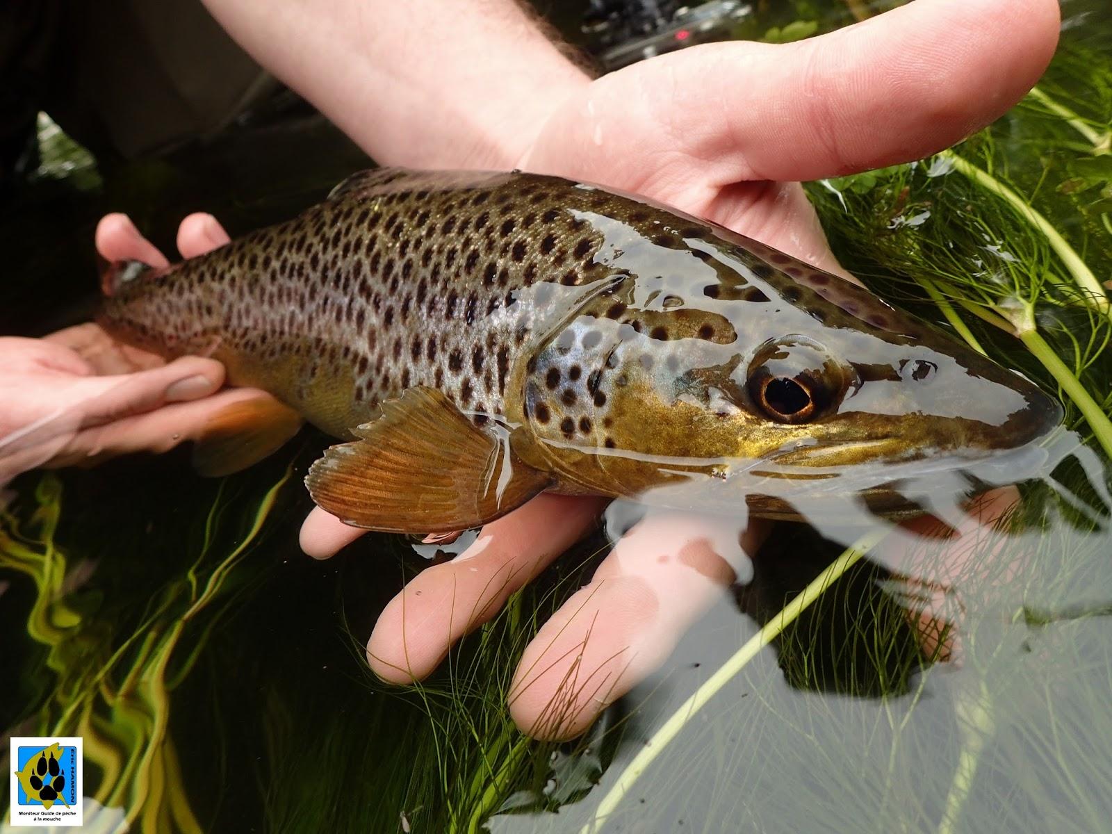 Le repos à saratove avec la pêche