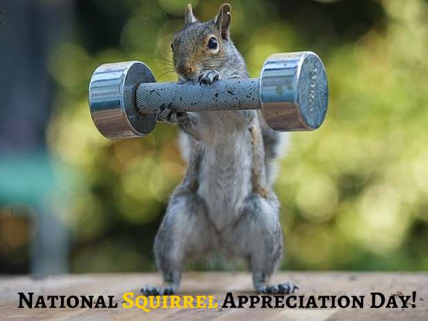 National Squirrel Appreciation Day Wishes pics free download