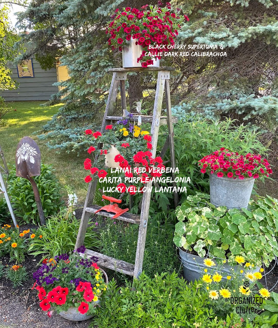 Photo of junk garden flower border with captions