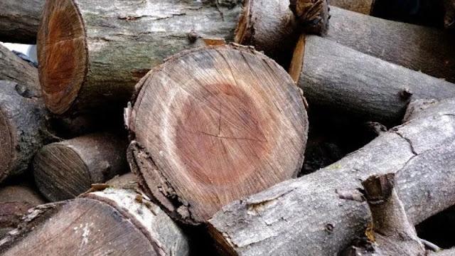 motif dan warna kayu kamper