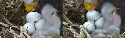roe2 - Eagle Eyes!
