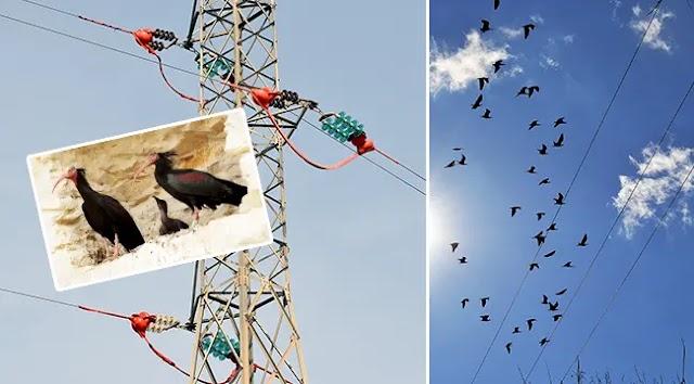 Dicle Elektrik'ten Kelaynaklara elektrik koruması