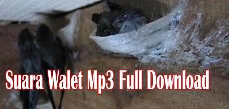 Suara Walet Mp3 Full Download
