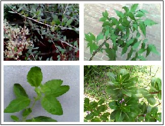 Medicinal Plants & Their Uses: Introduction