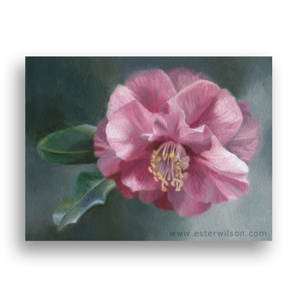 Straight from my garden - Morning Camellia Oil Painting on Panel 8 x 6